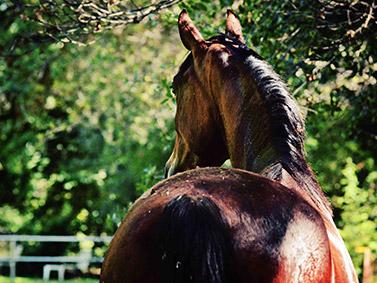 horse_02