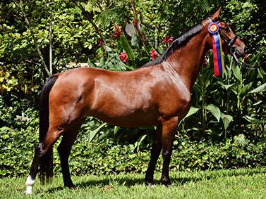 horse_06