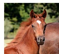 horse_thumb_image